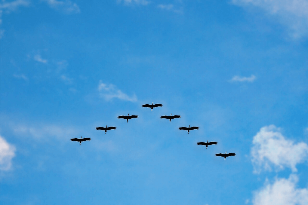 social norms to break in bird formation